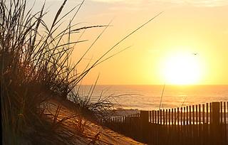 Ocean City Dunes