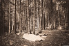 Ricketts Glen Black & White (charlie_guttendorf) Tags: autumn forest guttendorf nikon18200mm nikond7000 pastateparks rickettsglen rickettsglenstatepark fall leaf outdoorphotography outdoors outside padcnr treeleaves trees wilderness