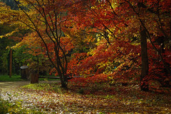 Rogów - Arboretum (Kosmi88) Tags: poland polska nikon d60 forest las arboretum trees road tree autumn jesień leaf colors mushrooms outdoor october październik walk spacer house nikond60