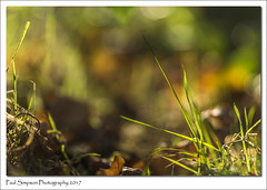 Kaleidoscope of Colour (Paul Simpson Photography) Tags: paulsimpsonphotography photoof photosof imagesof imageof sonya77 autumn nature dof naturalworld sonyphotography october 2017 leaves grass sunshine fall coloursofnature colorsofnature