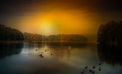 Birds. (augustynbatko) Tags: birds lake water sky clouds sun trees landscape nature autumn