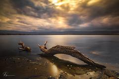 Green Weed.. (e0nn) Tags: steveselbyphotography steev steveselby pentax pentaxk1 hdpentaxdfa2470mmf28edsdmwr lakeillawarra lake sunset ndgrad ndfilter