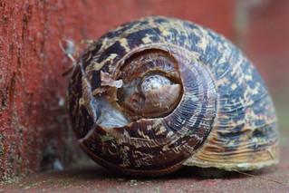 Spiral Snail Shell