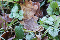 """frosty_leaves • <a style=""""font-size:0.8em;"""" href=""""http://www.flickr.com/photos/60431041@N08/24048835968/"""" target=""""_blank"""">View on Flickr</a>"""