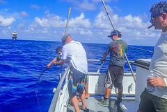 (Rob Zabroky) Tags: robzabroky robzabrokyoutdoor robzabrokyphotography robzabrokyfishing portaransas gulfofmexico gulfofmexicoyellowfintuna yellowfintuna dolphinexpressyellowfintuna yft fishing fish fishtexas offshorefishing offshorefishingtexas dolphinexpress dolphinexpressportaransas
