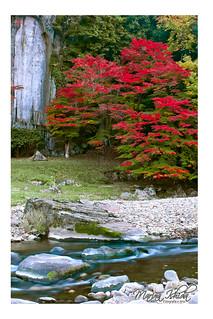 Outono japan