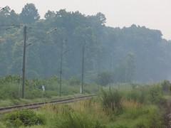 Tracks to The Jungle (Avinash Pandey.) Tags: ngc jungle incredibleindia indianrailways kushmi gorakhpur