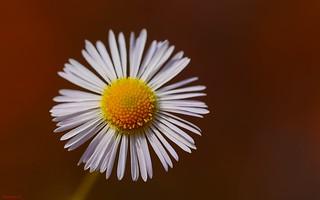Flower Macro- (3774)