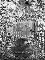 The entrance to the Realm of Faeries (zinnia2012) Tags: monochrome negative entrance gate leaves poetic portail marches steps feuillage zinnia2012