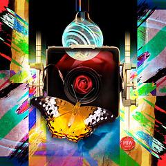 Lens (mfuata) Tags: lens objektif camera kamera light ışık color renk harmony armoni rapport uyum symmetry simetri butterfly kelebek grace zarafet