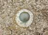 OSBM Bolt: Hilbre TGBM (Dugswell2) Tags: osbmbolt hilbreisland siblet