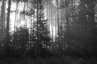 early moring in algonquin park