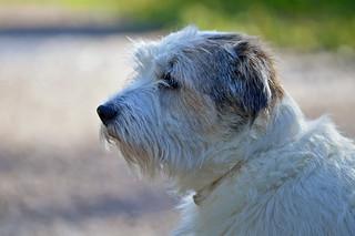 Tesla (our neighbor's dog) 😂
