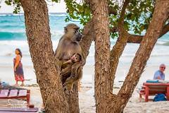 Monkey beach :)