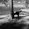 Service dog is hiding (Sanna Taas) Tags: service dog servicedog