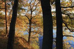 Möhnesee - Hevesee (Michael.Kemper) Tags: canon eos 6d canoneos6d canonef1635f4lisusm ef 1635 f4l f4 l is usm deutschland germany nrw nordrheinwestfalen northrhinewestphalia westphalia möhnesee moehnesee möhne moehne see lake sauerland kreis soest gemeinde flus river reservoir mohne mohnesee dambusters dam möhnetalsperre heve hevesee fluss herbst autumn fall laub herbstlaub herbstlaubfärbung färbung laubfärbung foliage baum bäume tree trees leave leaves rot red orange beautiful schön wunderschön