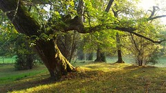 Kummelön (anek07) Tags: kummelön annaekman samsung sweden sunday autumn trees sun