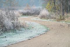 The path goes ever on (SF knitter) Tags: desplainstrail halfdayforestpreserve illinois lakecounty frost mist preserves sunrise