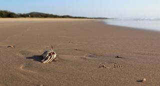 60/100 - Sand Crab