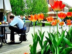 Concentrating (Photoscriber) Tags: columbus ohio oh columbusoh osu campus