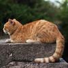 (diffendale) Tags: bulgaria българия βουλγαρία bulgaristan болгария bulgarie cat gatto
