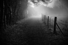 Misty Morning Journey (briburt) Tags: briburt massachusetts nikon d7000 composition landscape newengland fall autumn mist fog foggy countrylane seasonal october path road dirtroad fence grass tree trees monochrome bw blackandwhite moody mood atmospheric spooky rural misty poetic poetry
