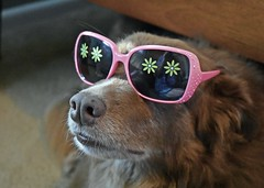 Pretty In Pink (One Day Of Sun -- It's So Lovely!!!) Tags: ddc 2163 inthepink shizandra shades sunglasses pink flowers posing