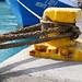 yellow safeguard