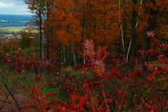Autumn on Rib Mountain (FiddleHiker) Tags: stateparks autumnsplendor autumnleaves fallcolors fallfoliage ribmountainstatepark wisconsin wisconsinstateparks wisconsinriver red orange green blue