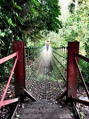 Burma Rope Bridge (heathernewman) Tags: bridge travel burmaropebridge ropebridge jungle england uk cornwall heligan lostgardensofheligan