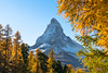 Legendary (Swiss.PIX) Tags: suíça svizra switserland schweiz switzerland sony suisse suiza svizzera szwajcaria švýcarsko švice sun swiss switserlân swîsre switzer myswitzerland zermatt cervino cervin autumn herbst lärche larch colour color colorful colors colours bunt
