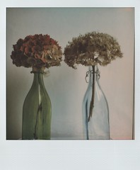 Life and death, and looking for beauty in both. (roo_roo_s) Tags: polaroidweekfall2017 roidweek polaroidweek polaroid