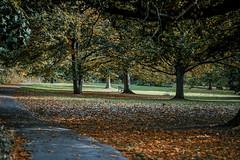 The Autumn park (Julie Greg) Tags: park kent tree autumn grass colours