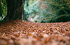 Silence (V Photography and Art) Tags: low woods woodlandfloor leaves autumn dof shallowdof nature perspective pov pointofview