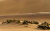 in the sandbox (Karl-Heinz Bitter) Tags: sand dunes namib namibia desert green landscape landschaft nature karlheinzbitter colors grün life