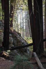 untitled-3.jpg (mat3o) Tags: ca trees hike waterfall mcwaybeach bigsur trail redwoods ewoldsentrail route1 coast california pch