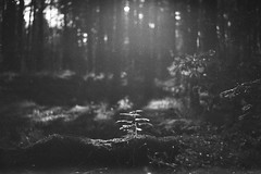 fortepan-100-9 (Vasily Ledovsky) Tags: 35mm expired film forte bw fortepan 100 blackwhite voigtlander canon bessat ltm 50mm 18 monochrome