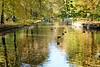 colorful autumn (lichtauf35) Tags: color autumn2017 impression reflection schlossparknymphenburg 5dmk2 sigmaex85f14 lightroom