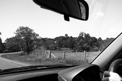 DSCF9209 (nathan_west) Tags: montville mapleton queensland fog rainy outback rural australia boy dog staffy black white fujifilm x100
