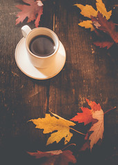 Time to enjoy a cozy autumn cuppa. (Fire Fighter's Wife) Tags: tea leaves leaf colors wood table stilllife tabletopstilllife tabletop light autumn fall matte muted mutedcolors mutedhues faded fadedcolors fadedhues saucer teacup teatime cold olympus timing flickrfriday 1250mm 1250mmf3563 favorite 52in2017 50favorite t