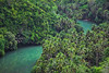 Into the Jungle (free3yourmind) Tags: jungle trees forest palms river blue green water bohol philippines travel explore adventures wild nature