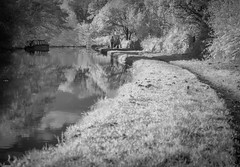 Paths (Chris Willis 10) Tags: infraredcanal path towpath canal water boat people blackandwhite barge dog