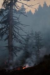 Controlled Burn (dsgetch) Tags: controlledburn forestfire landmanagement privateforestmanagementarea smoke smokey fire clearcut eugene eugeneoregon eugenespringfield oregon briggshillroad cascadia pacificnorthwest pnw lanecounty