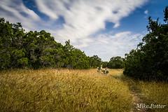 Government Canyon (mike.potter) Tags: bexarcounty governmentcanyonstatenaturalarea hiking sanantonio stateparks texas