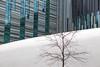Kontrast (MKP-0508) Tags: leipzig universität university université modern architecture architektur glas glass verre weis blanc white audimax baum tree arbre fenster window fenêtre