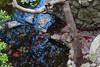 IMG_20171021_144023_4224_LR95 (sudeshka) Tags: japanesegarden botanicalgarden branches leaves rosepetals steppingstones stones water wood austin texas usa