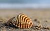 Shells (A Journey With A New Camera) Tags: shells shell beach sand sea seaside ocean poole dorset sandbanks texture pattern