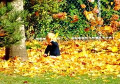 One of Autumn's precious moments (peggyhr) Tags: peggyhr child autum leaves golden yellow orange tree fence dsc00071a burnabymountainpark burnaby bc canada niceasitgets~level1
