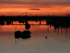 Swan Vista (crusader752) Tags: swan sunset adurferrybridge footbridge boats yachts silhouettes wake riveradur adur waterfowl shorehambysea