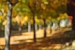Otoño en Pirineos (joseange) Tags: bokeh otoño pirineos meyeroptik